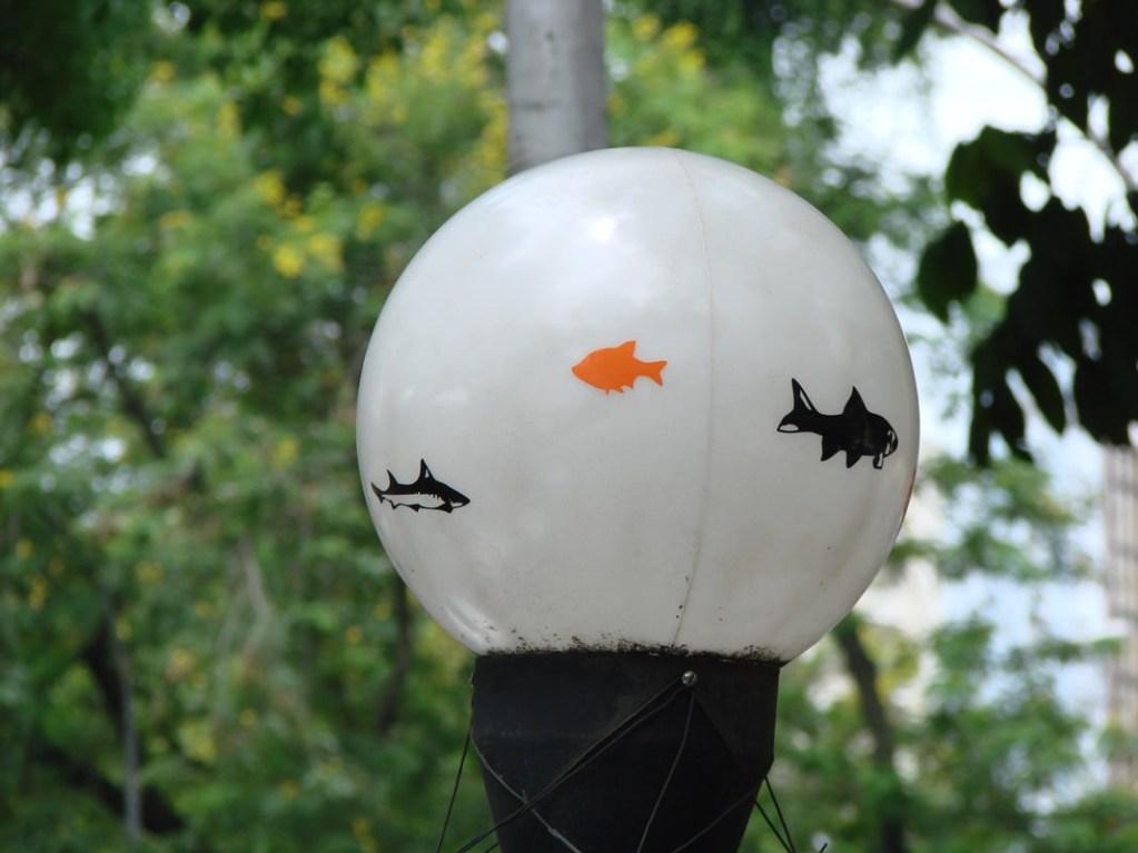 aquario-suspenso06