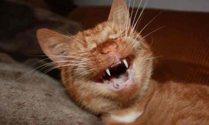 バイブリシア人は動物の目の損傷を避けるのに役立ちます