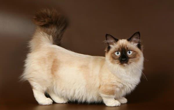 I oholil moja mačička