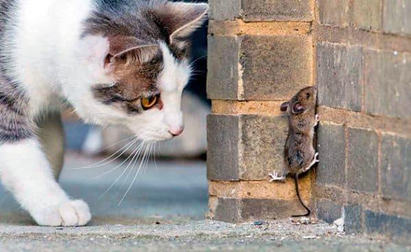 Можно ли кошке капать Тауфон? Глазные капли Тауфон: как применять, для чего назначают Можно ли капать в глаза кошке тауфон