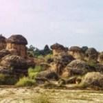 Bukit Jamur, tempat wisata baru di Kabupaten Gresik