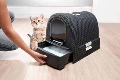 como-lograr-que-un-gato-hagan-sus-necesidades-en-un-arenero