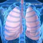 Por qué Tengo Tanta Flema En Los Pulmones