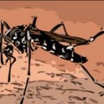 ¿Cuál Es El Mejor Remedio Casero Para Picadura De Mosquito?