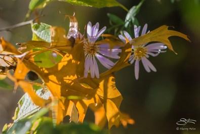Golden Leaf and Fall Flower, Central Park 10/25/2014
