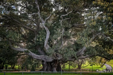 Royal Botanical Garden, Sydney