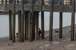 Thames 12/19/2015