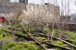 2011-04-17 High Line 13