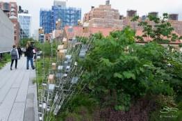 20110614 High Line 073.NEF