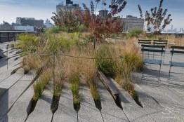 2011-11-03 High Line 22