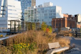 2011-11-11 High Line 22