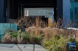 2011-11-22 High Line 17
