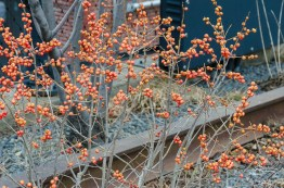 2013-02-25 High Line 01