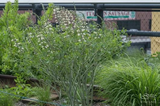 20130530 High Line 28