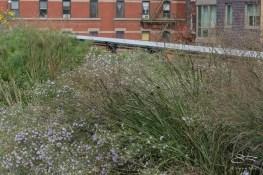 20150921 High Line 63