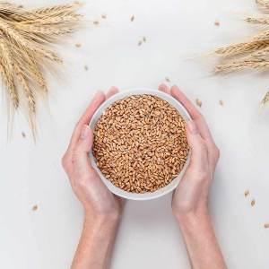 Tahıl Tohumları