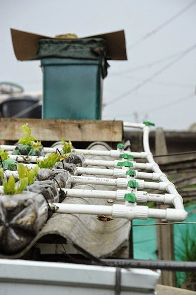 Cómo construir un techo verde comestible - Guía completa