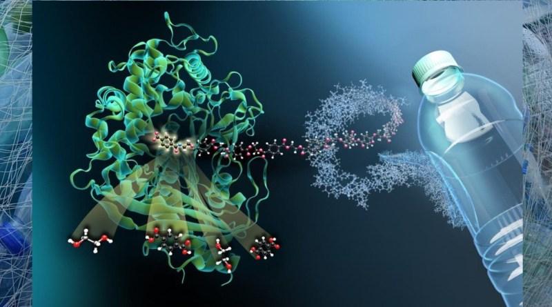 , Esta enzima mutante puede hacer que el plástico sea infinitamente reciclable