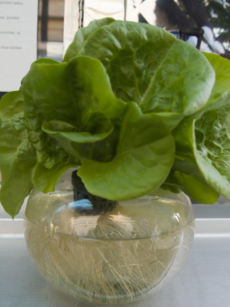 Cómo fabricar el sistema de cultivo hidropónico más sencillo