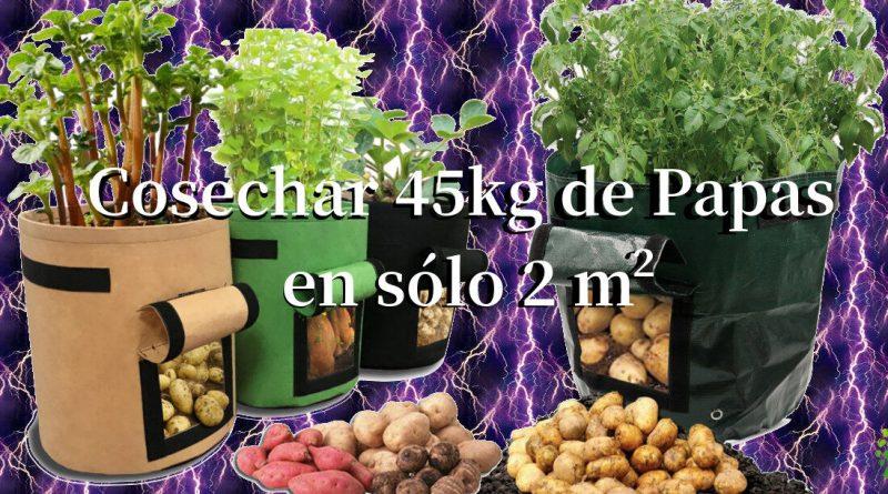 , Guía paso a paso: cultivar 45 kilos de patatas en un barril.