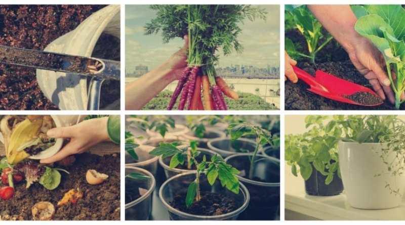 , Guía para principiantes: Cultivo de hortalizas y frutas en espacios reducidos