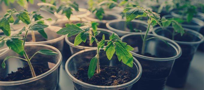 Guía para principiantes: Cultivo de hortalizas y frutas en espacios reducidos