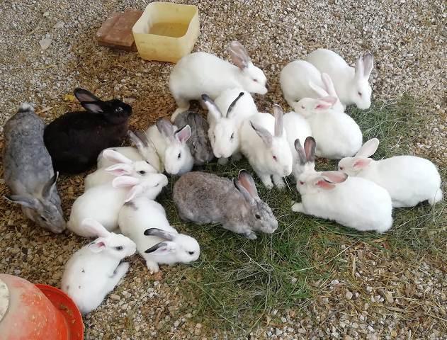 , Cómo criar conejos en el jardín, todos los consejos