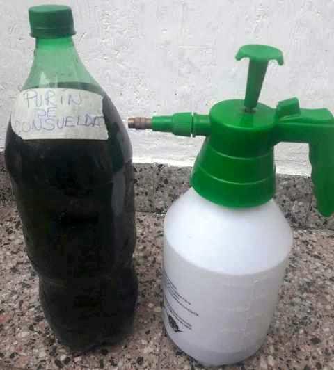 , Purín de consuelda, cómo hacer y usar este gran fertilizante