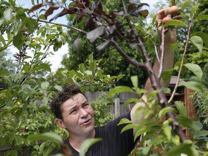 'Frankenstein': El extraño árbol que produce más de 40 tipos de fruta – Cultura Filosófica