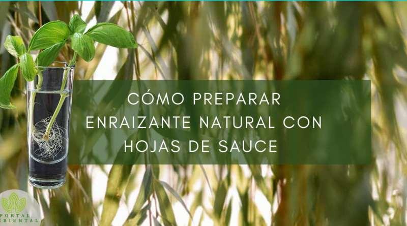 , Cómo preparar enraizante natural con hojas de sauce –