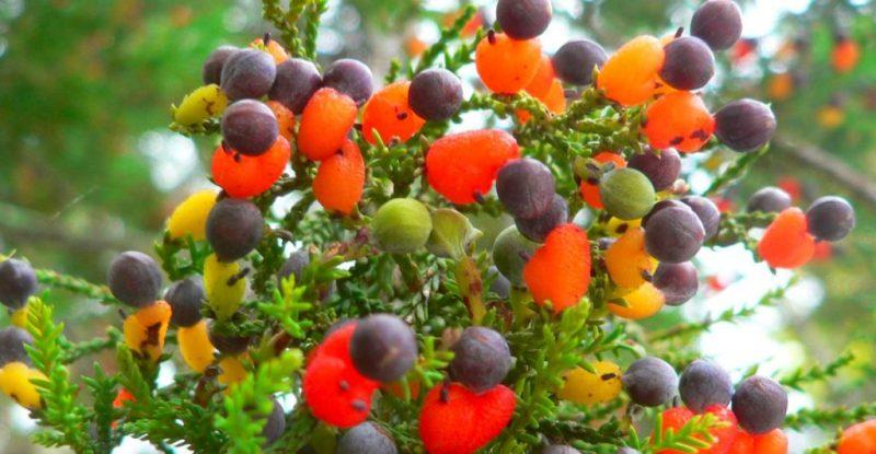El árbol «Frankenstein» donde crecen más de 40 tipos de frutas – Real Noticias