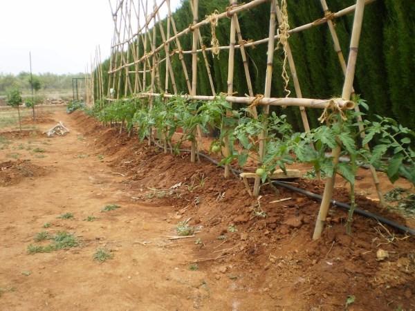 , Distancias optimas para el trasplante y la siembra de hortalizas en el huerto