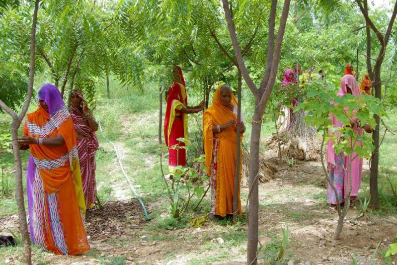 Cada vez que nace una niña, estas mujeres plantan 111 árboles -