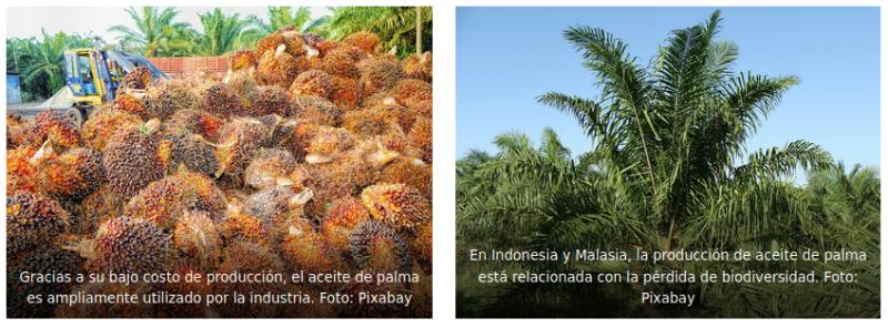 , Científicos canadienses crean un sustituto ecológico del aceite de palma