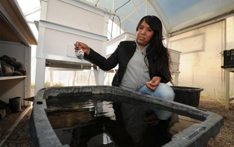 , Ingeniera Mexicana descontamina las aguas grises de los hogares con Flores