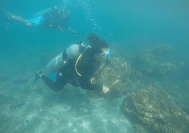 , Científicos en Costa Rica cultivan Corales para salvar los arrecifes