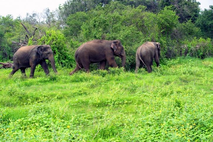 , Esta pareja convirtió tierras degradadas en una selva tropical