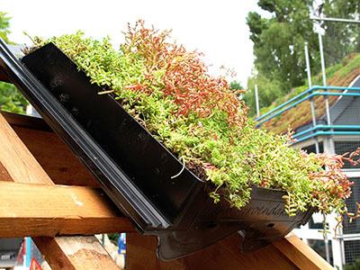 , Holandeses inventan tejas verdes que mejoran la eficiencia energética y aumenta la biodiversidad