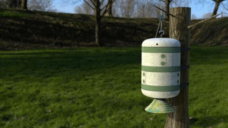 , Estudiante crea una colmena hecha de hongos que defiende a las abejas de enfermedades
