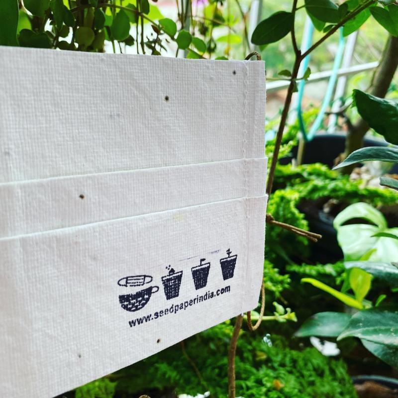 , Jóven crea Mascarillas biodegradables que luego de su uso se convierten en flores