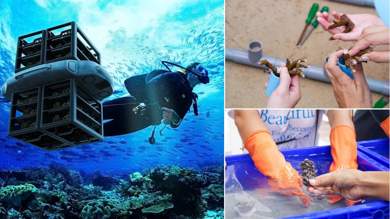 Jóven creó NEMO, un dron capaz de proteger y plantar 100 corales por día