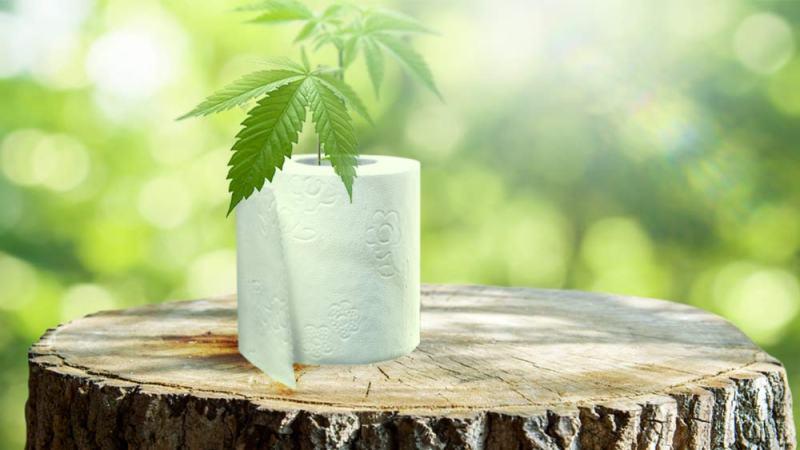 , El papel higiénico de Cáñamo podría salvar millones de árboles por año