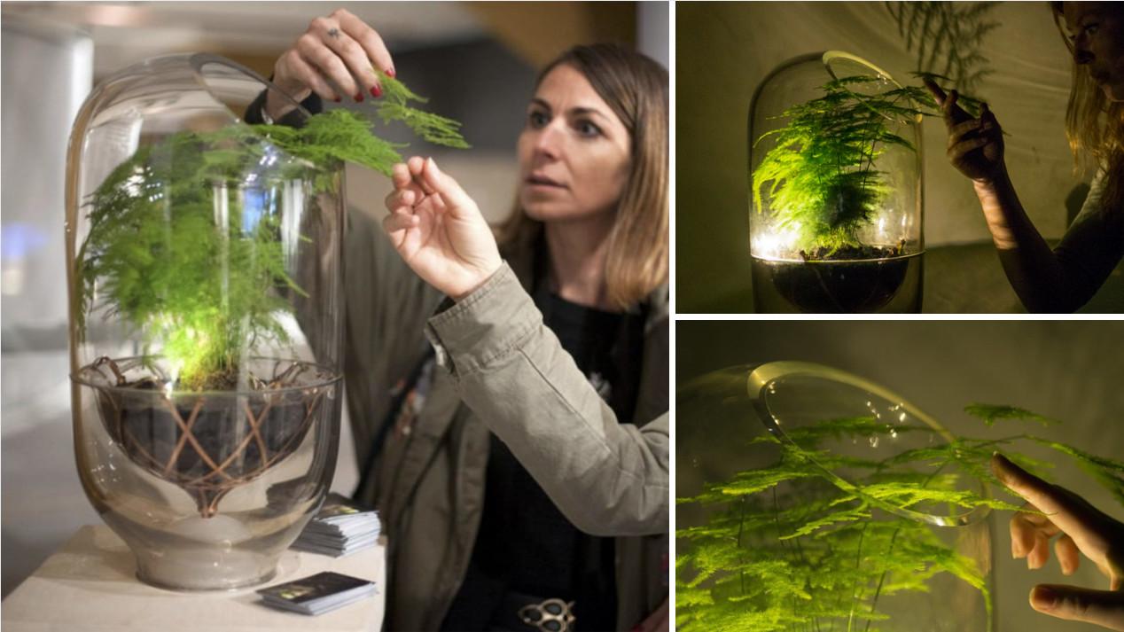 Esta lámpara funciona con la energía renovable que generan sus plantas