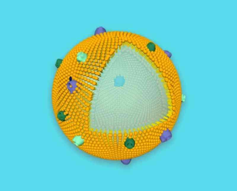 , Científicos desarrollaron un tratamiento natural que desintoxica a las abejas de pesticidas