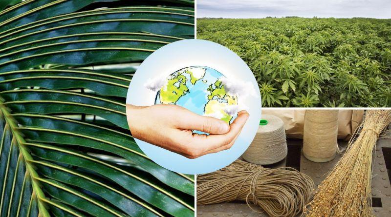 , Estas plantas sustituirán los plásticos: lino, cáñamo y coco