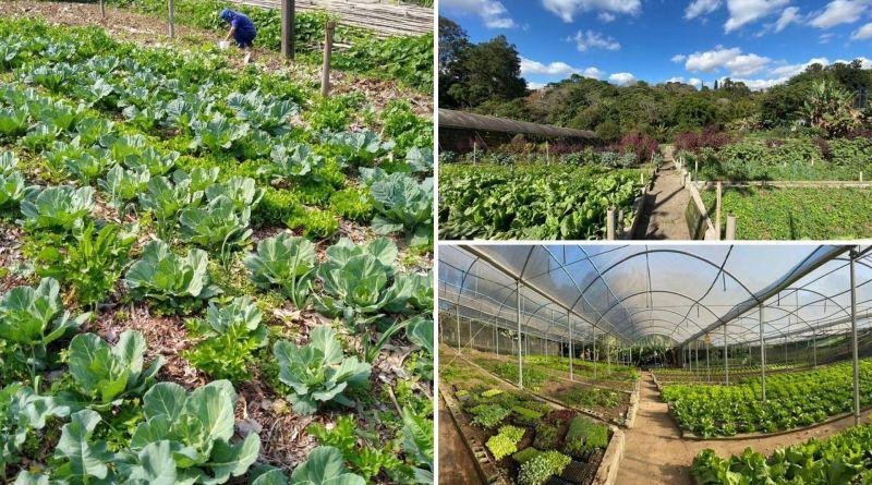 , Hospital cultiva más de 85 variedades de alimentos orgánicos para todos sus pacientes y trabajadores