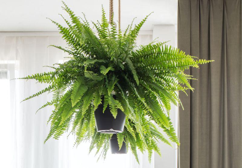 , Tenga al menos una de estas plantas, son verdaderas purificadoras del aire