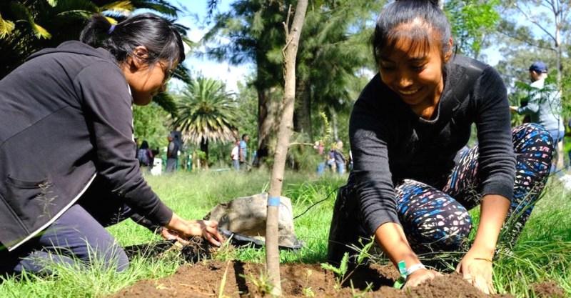 , Estudiantes deberán plantar un árbol para poder recibirse en Tamaulipas, México