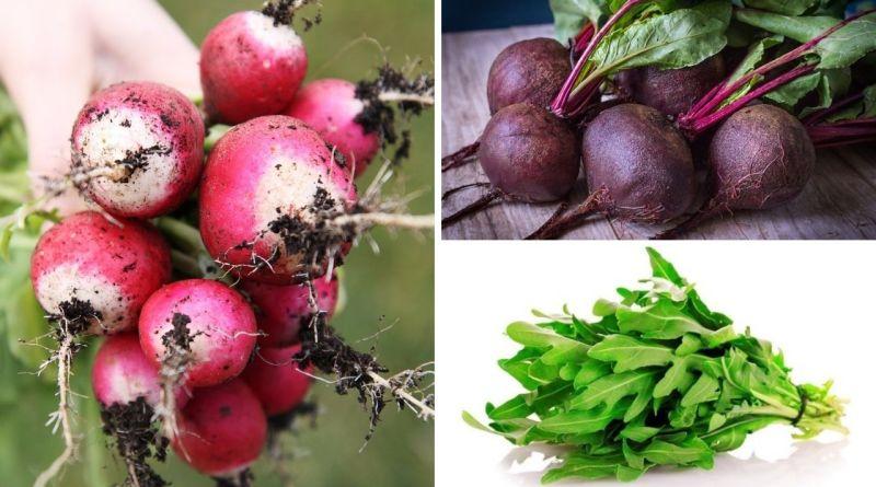 , Estos Vegetales podrás cosechar en 60 días o menos