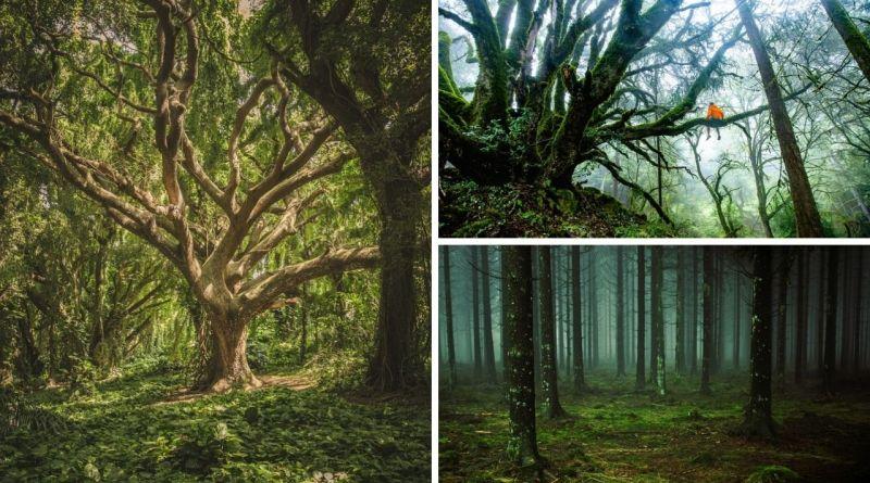 , El idioma secreto de los árboles que todos podemos aprender
